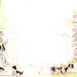 Cachorrinhos